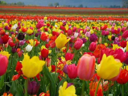 flores-coloridas